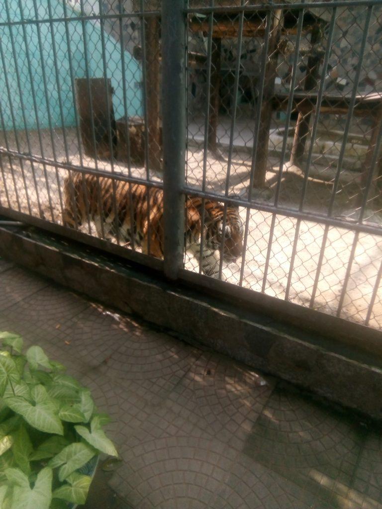 ハノイ動物園に行ってきました!