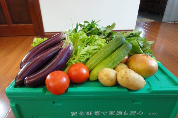 しゅんの野菜ボックス